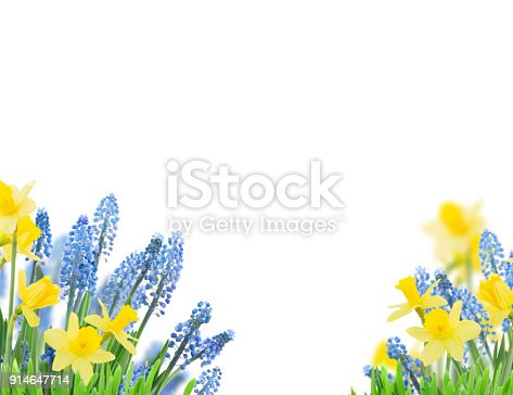 639245704 istock photo Spring bluebells and daffodils 914647714