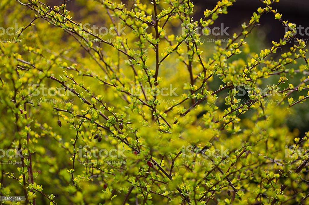 Spring blurred bokeh background royalty-free stock photo