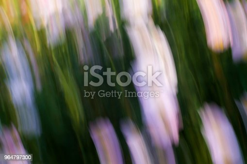 Spring Blurred Flowers Abstract Motion Blur Effect Stock Photo & More Pictures of Blossom