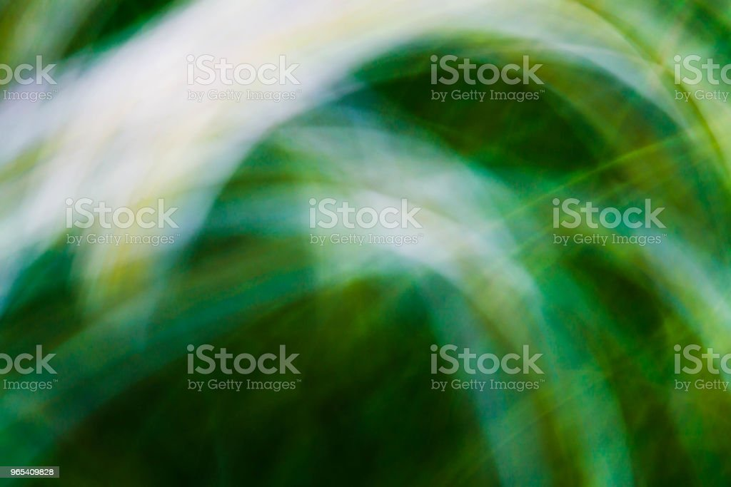 Spring blurred flowers. Abstract motion blur effect royalty-free stock photo