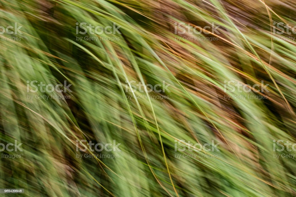 Spring blurred leaves. Abstract motion blur effect royalty-free stock photo