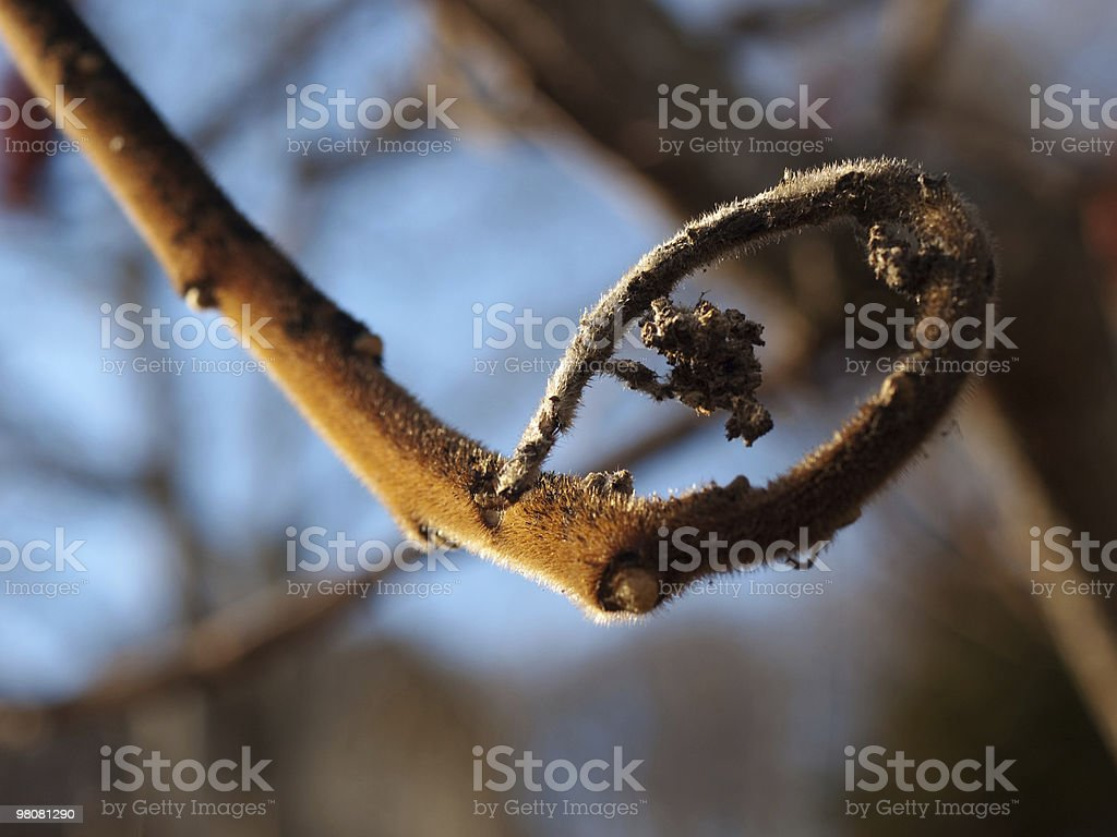 spring bokeh royalty-free stock photo