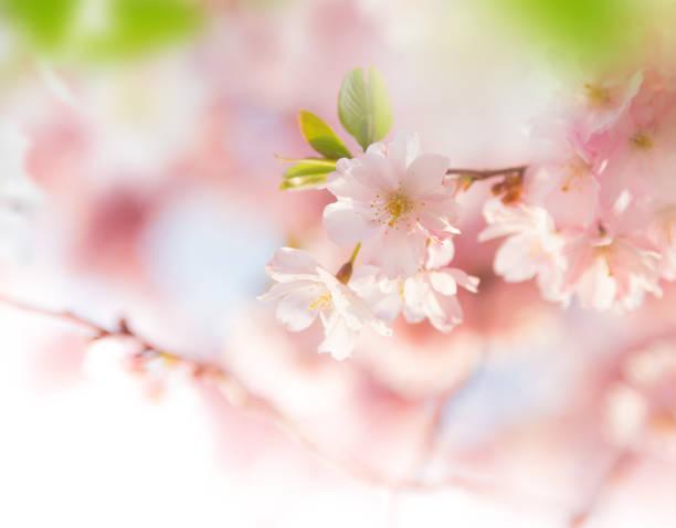 春のピンクの花の背景にボーダー ストックフォト