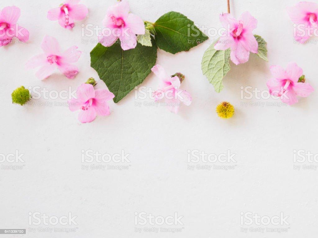 Bouquet Flower Formal Garden Plant Thailand Spring Border Background