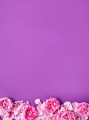 istock Spring border made with pink roses and petals on pastel purple background. Valentines Day and Mother Day background. 1159674493
