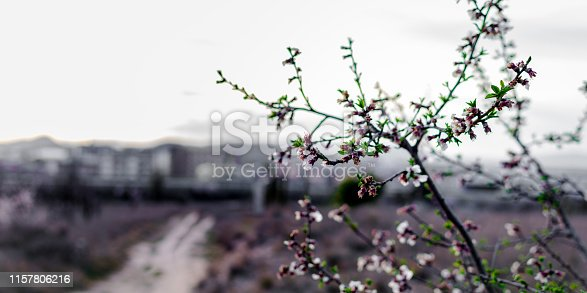 istock Spring border or background art with pink blossom 1157806216