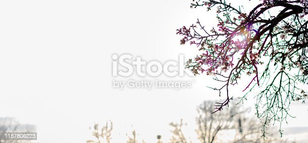 istock Spring border or background art with pink blossom 1157806223