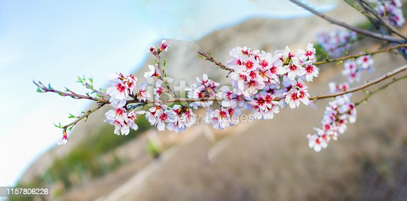 istock Spring border or background art with pink blossom 1157806226