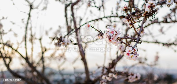 istock Spring border or background art with pink blossom 1157806232