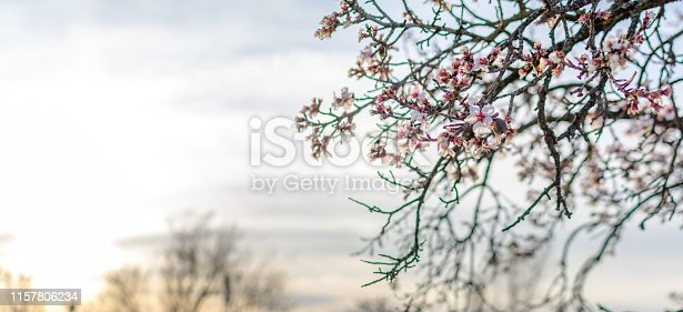istock Spring border or background art with pink blossom 1157806234