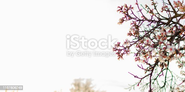 istock Spring border or background art with pink blossom 1157806249