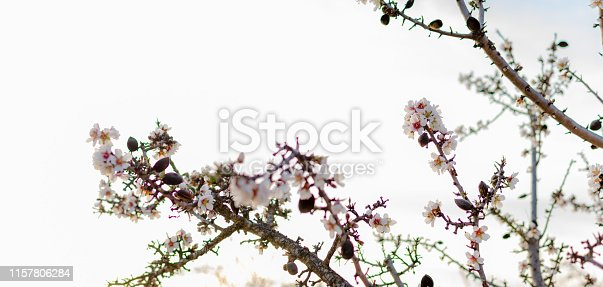 istock Spring border or background art with pink blossom 1157806284