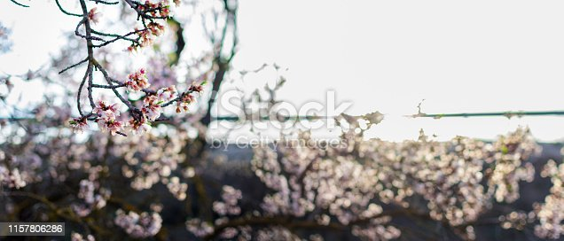 istock Spring border or background art with pink blossom 1157806286