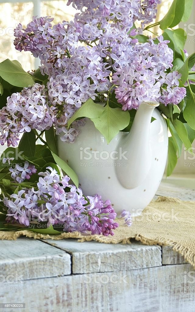 Spring Bouqet Purple Lilacs in a White China Tea Kettle stock photo