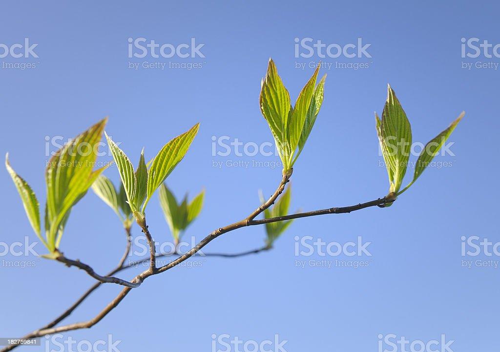 Spring branch royalty-free stock photo