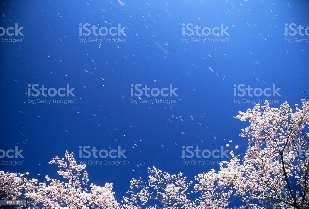 春のそよ風の ストックフォト