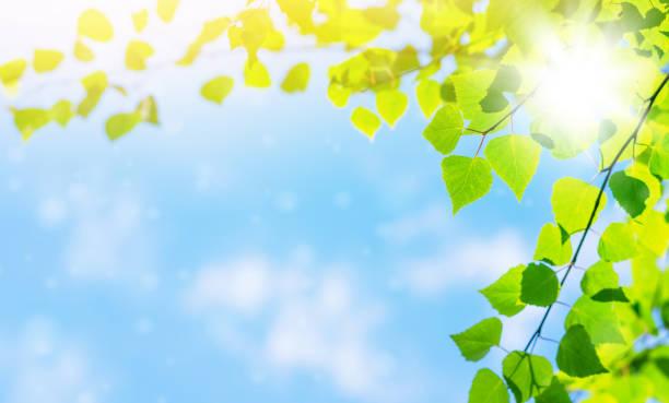 春の明るい背景 - 木漏れ日 ストックフォトと画像