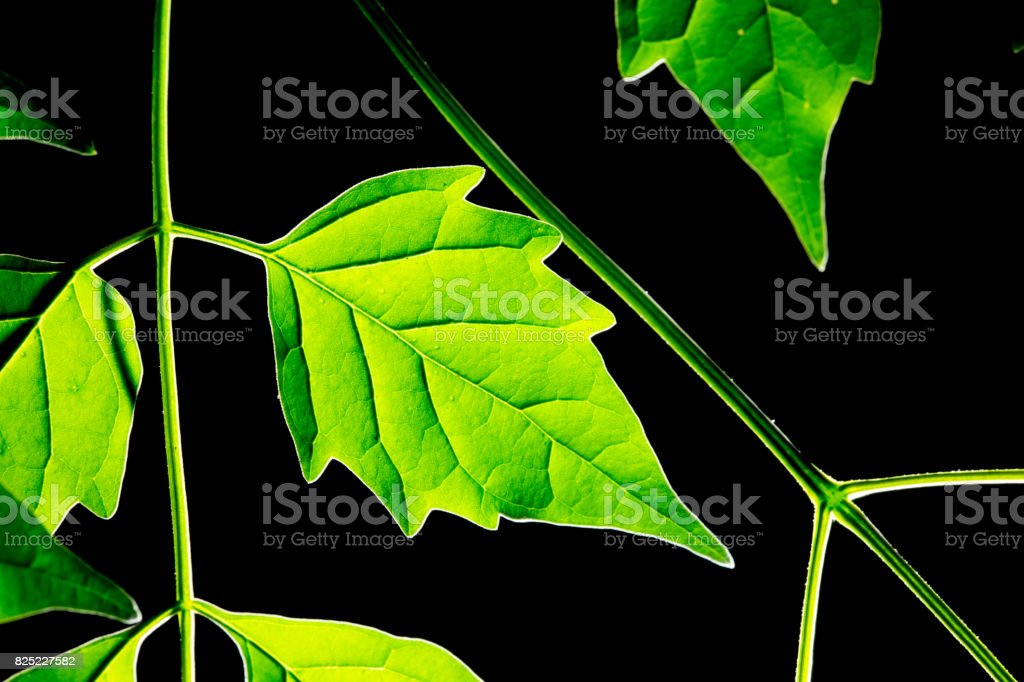 spring bright green fern background shallow depth of field stock photo