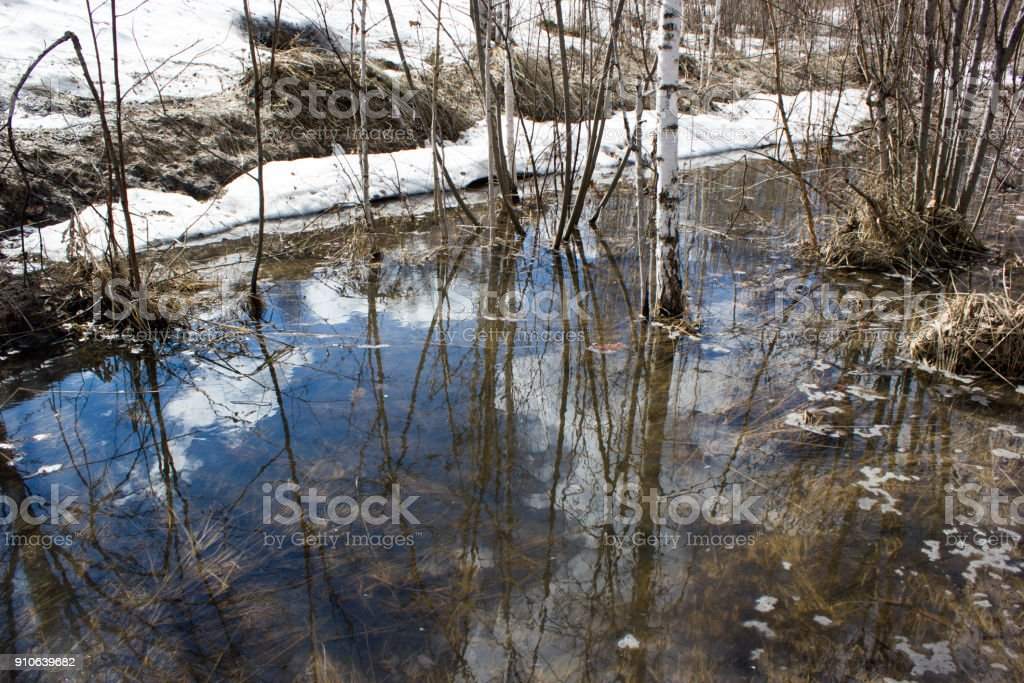 Spring brook in a birch forest stock photo