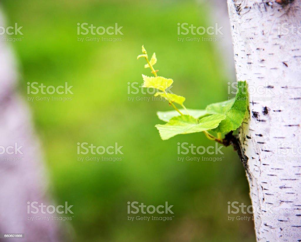 Spring buds in spring stock photo