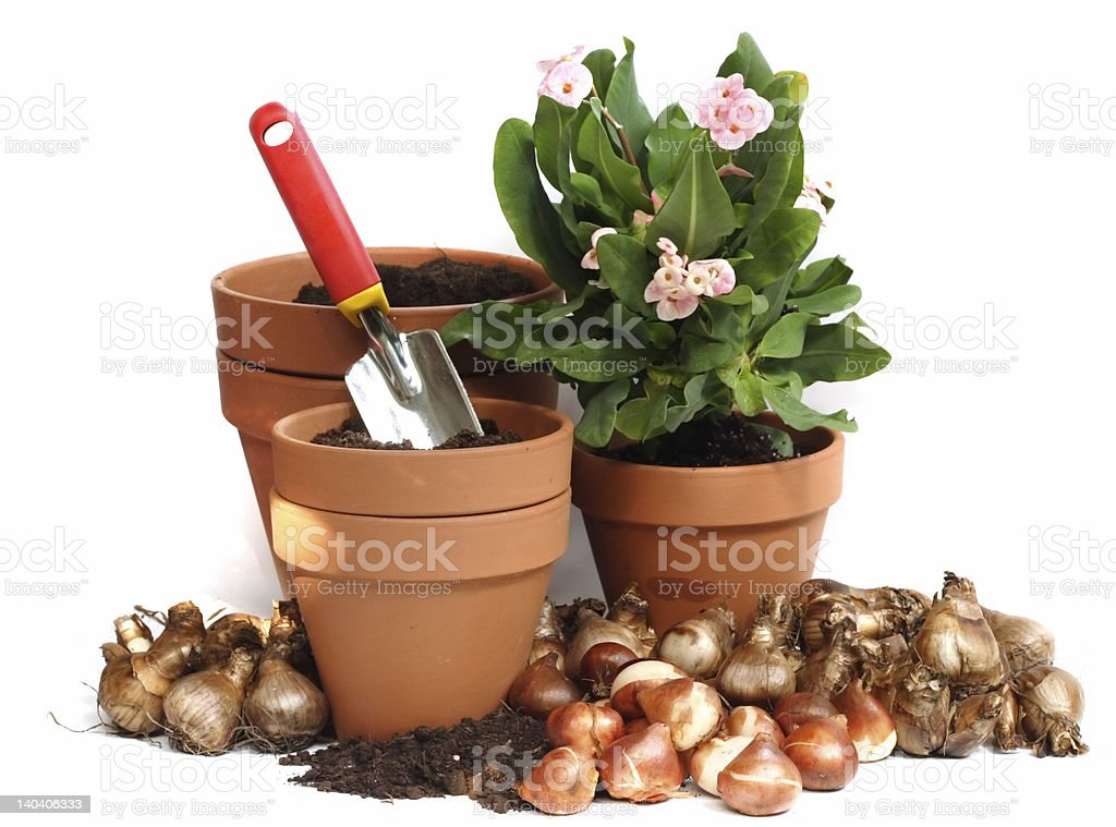 spring bulbs royalty-free stock photo