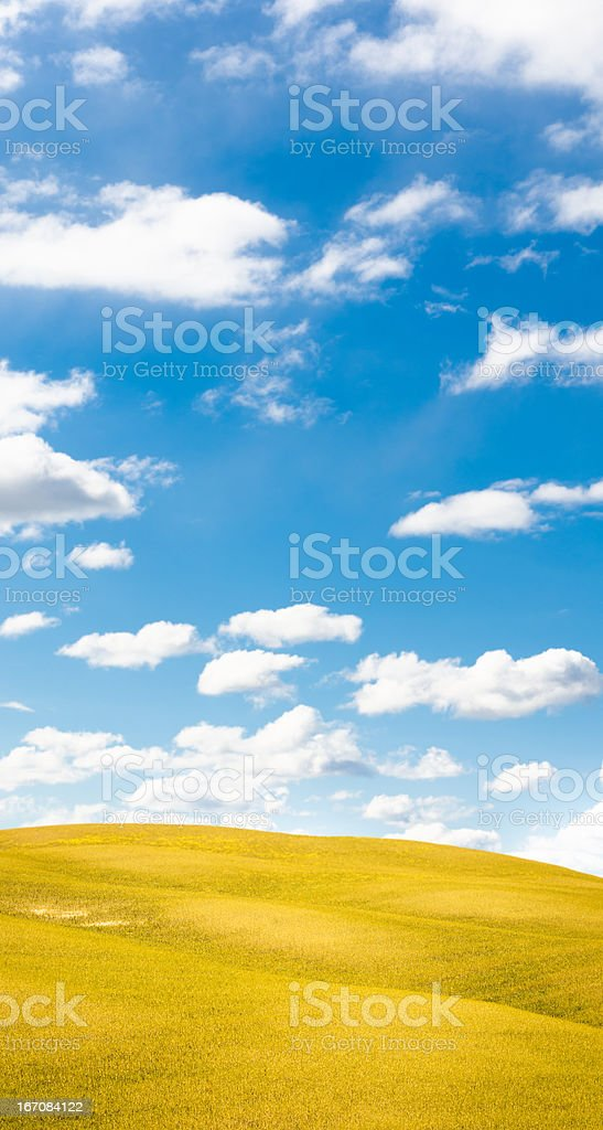Spring canola field meadow on italy royalty-free stock photo