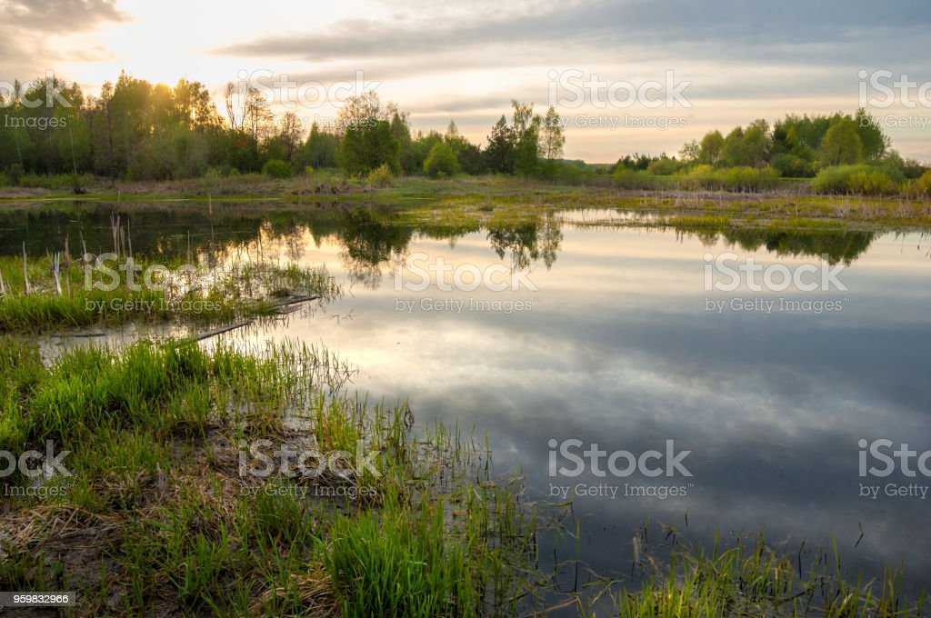 Spring catering. A beautiful spring landscape with a swamp, Sunrise. Green forest and cloudy sky with clouds. Natural environmental concept in the open air. stock photo