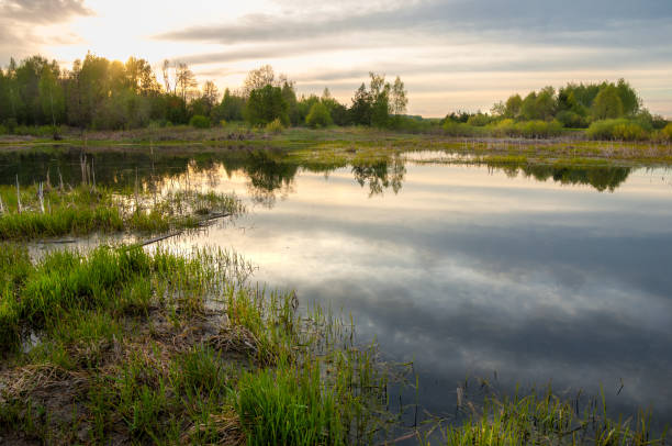 spring catering. a beautiful spring landscape with a swamp, sunrise. green forest and cloudy sky with clouds. natural environmental concept in the open air. - mokradło zdjęcia i obrazy z banku zdjęć