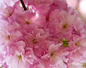 istock Spring Cheer 1217272444