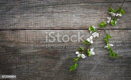istock Spring cherries blossom 672093854