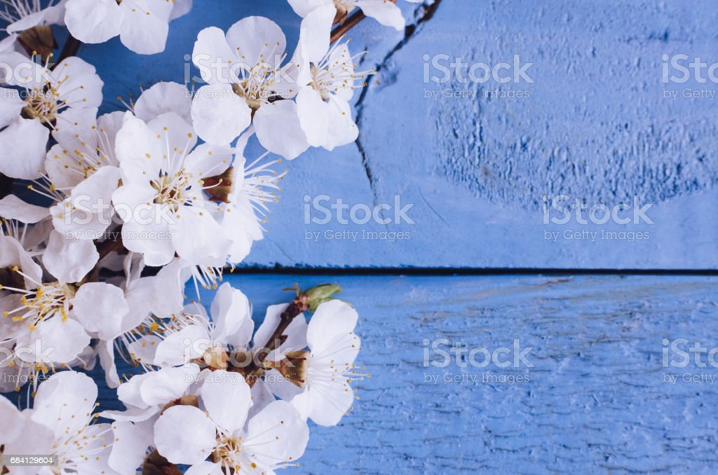 Spring cherry blossom on rustic wooden background. foto stock royalty-free