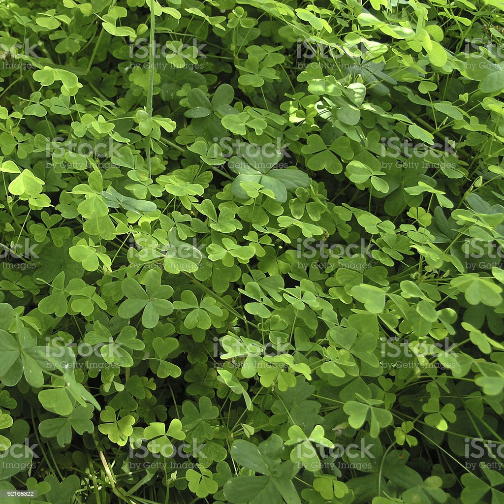 Spring Clover Background royalty-free stock photo