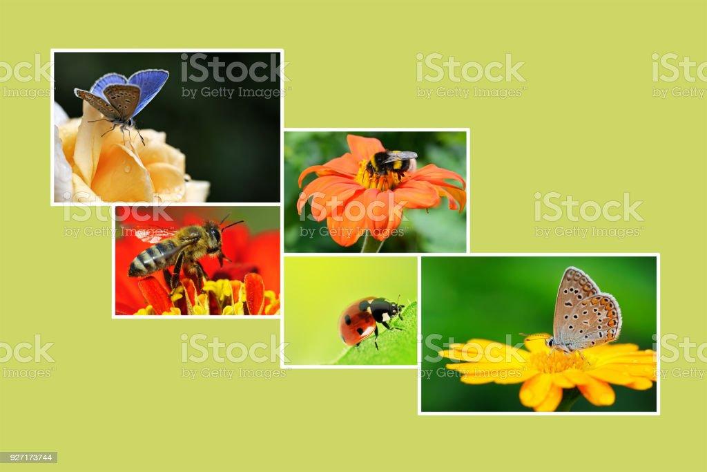 Collage de printemps avec des plantes à fleurs et insectes - Photo