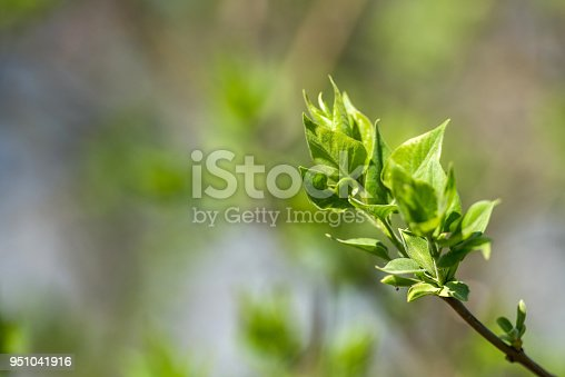 istock Spring color background - abstract floral frame of green leaves 951041916
