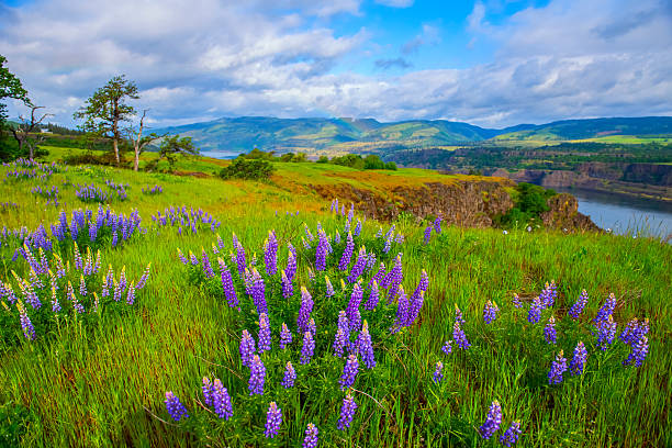 Spring Colors at Rowena Crest stock photo