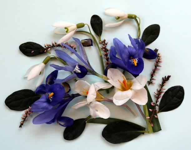 Frühling-Zusammensetzung: Blumenstrauß im Frühling, Iris, Schneeglöckchen, Krokus – Foto