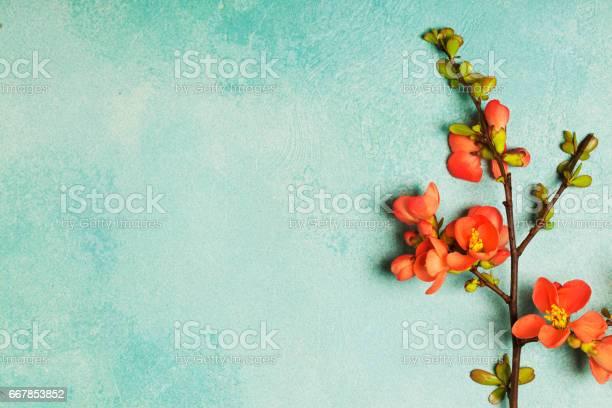 Spring concept picture id667853852?b=1&k=6&m=667853852&s=612x612&h=vjbfvyqanwrxkxo6gyo21a k18h n iuvo6cfd 1no8=
