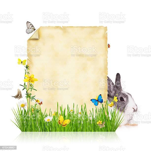 Spring concept with blank paper picture id470438601?b=1&k=6&m=470438601&s=612x612&h=jz jksrogplscqu pqhxspenezrmonw1lji9zp0ak4o=