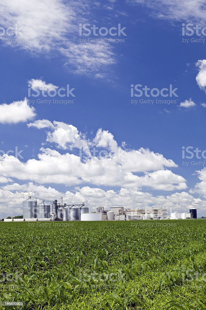 Spring Cornfield with Ethanol Biorefinery in the Background stock photo