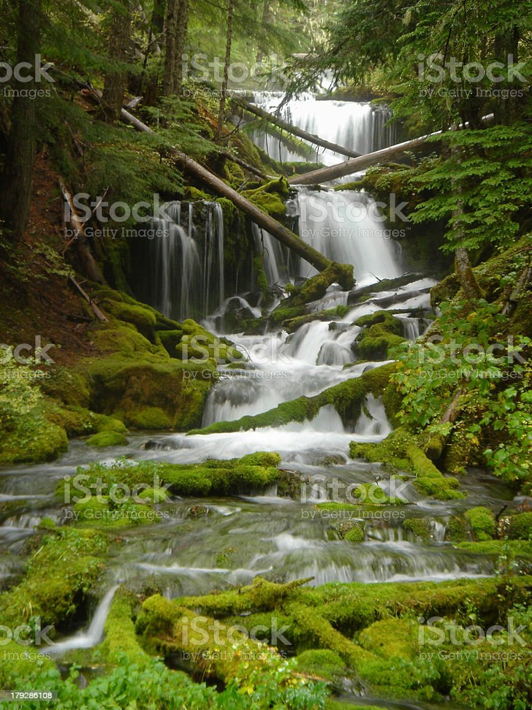 Spring Creek with Fallen Trees and Moss royalty-free stock photo