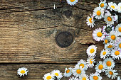 istock Spring daisies 476378956