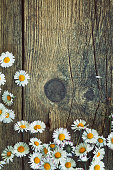 istock Spring daisies 476388960