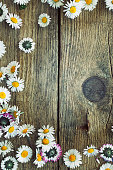 istock Spring daisies 483206678