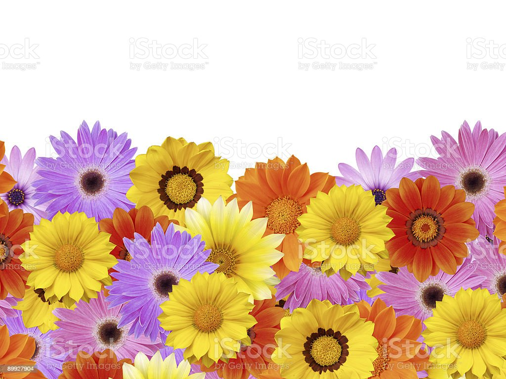 Spring daisy flower frame / border stock photo