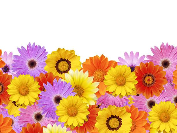 Printemps fleur daisy cadre/frontière - Photo