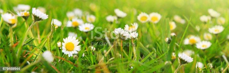 Spring Daisy In The Meadow 照片檔及更多 健保和醫療 照片