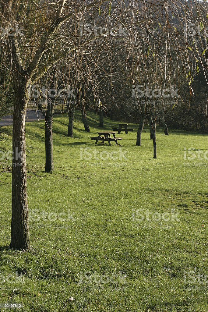 spring danish forest sceneries royalty-free stock photo