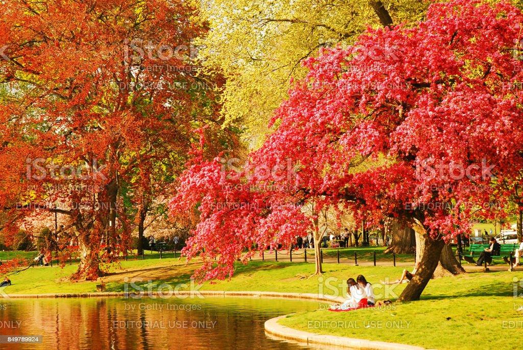 Spring Day in Boston Publik Garden stock photo