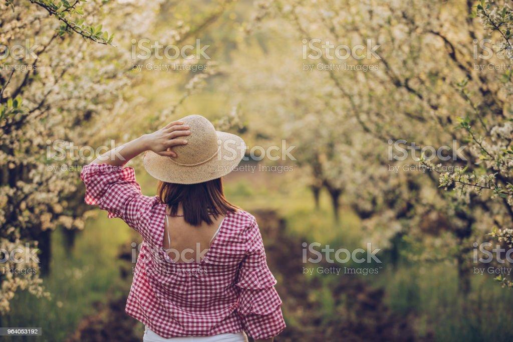果樹園の春の日 - 1人のロイヤリティフリーストックフォト