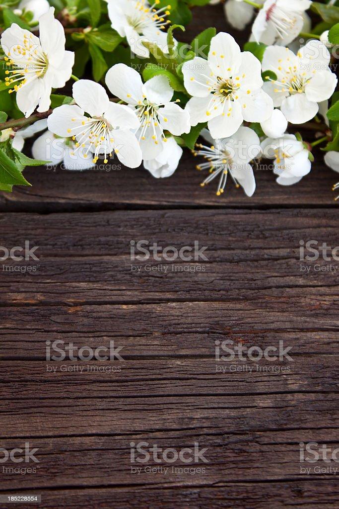 Spring Decoration stock photo